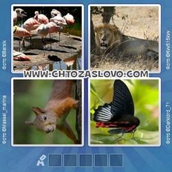 Ответ на уровень 112: фауна