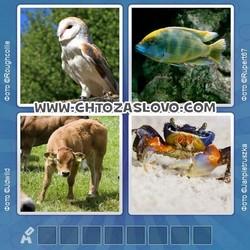 Ответ на уровень 116: животное