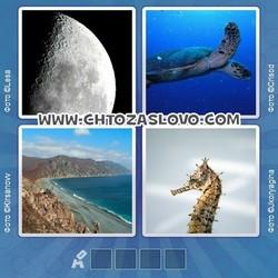Ответ на уровень 262: море