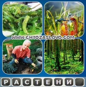 Ответ: растение