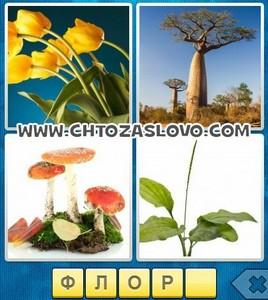 Ответ: флора