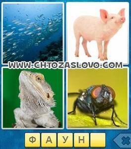 Ответ: фауна