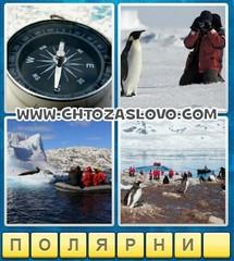 Ответ: полярник