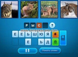 Ответ: рысь