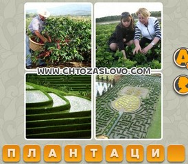 Ответ: плантация
