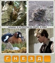 Ответ: гнездо