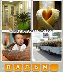 Ответ: пальма