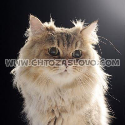 Ответ: кот