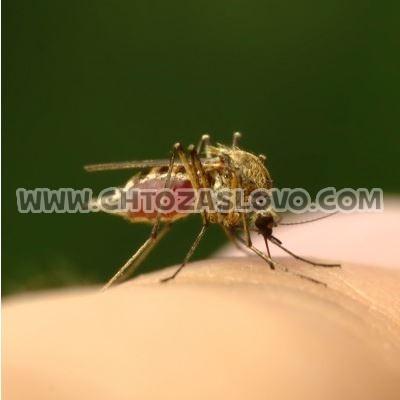 Ответ: комар