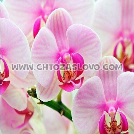 Ответ:  орхидея