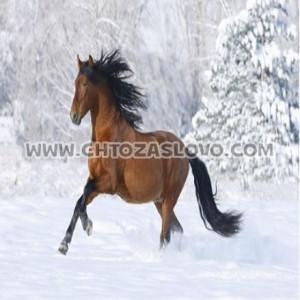 Ответ: лошадь