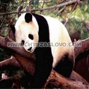 Ответ: панда