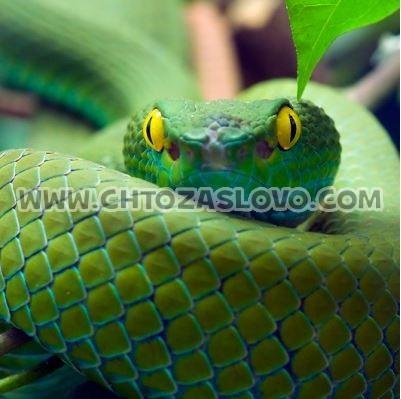 Ответ: змея