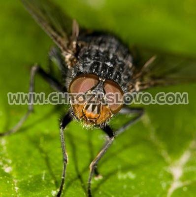 Ответ: муха