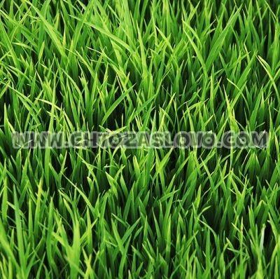 Ответ: трава