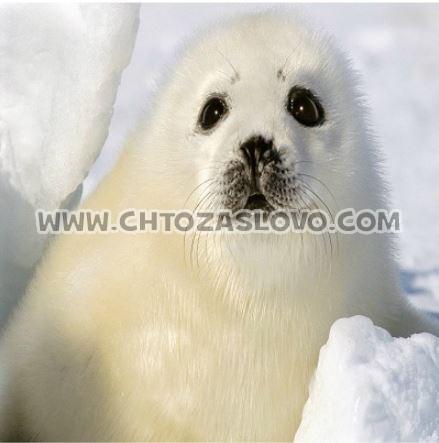 Ответ: тюлень