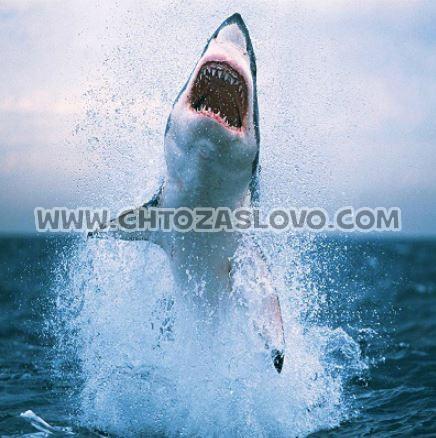 Ответ: акула
