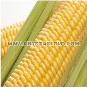 Ответ: кукуруза