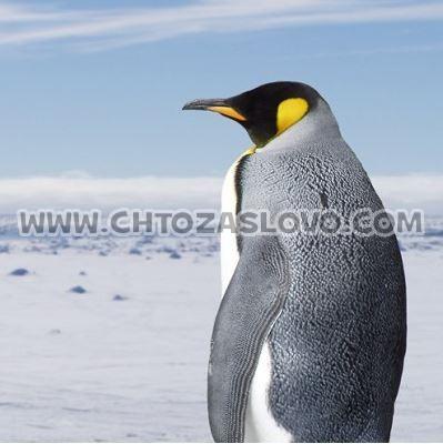 Ответ: пингвин
